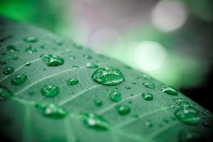 Rain drops on green leaf. Macro